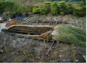 Hệ thống cỏ Vetiver