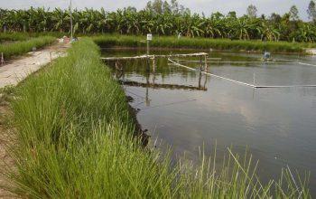 aquaculture3 1024x768
