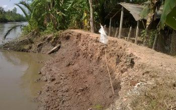 SẠT LỞ BỜ ĐÊ XÃ VĨNH XUÂN, TRÀ ÔN, VĨNH LONG (Riverbank and Dikes Protection in Vinh Xuan Commune, Tra On, Vinh Long Province)